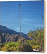 Desert Flowers In The Anza-borrego Desert State Park Wood Print