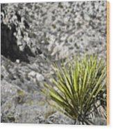 Desert Green Wood Print