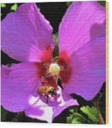 Desert Hibiscus With Honey Bee Wood Print