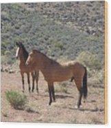 Desert Horses Wood Print