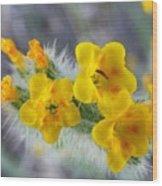 Desert In Bloom Wood Print