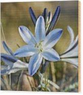 Desert Lily Wood Print