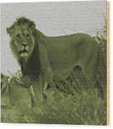 Desert Lions Wood Print