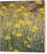 Desert Marigold Bouquet  Wood Print