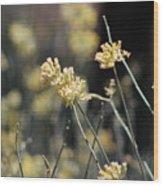 Desert Milkweed Wood Print