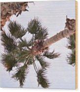 Desert Palm Wood Print