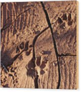Desert Paw Prints Wood Print