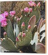 Desert Plants - Fuchsia Cactus Flowers Wood Print