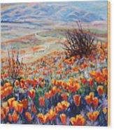 Desert Poppies Wood Print