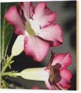 Desert Rose 7 Wood Print
