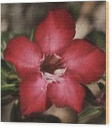 Desert Rose In Daytona Wood Print
