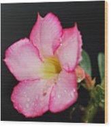 Desert Rose On Black Wood Print