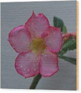Desert Rose On White Wood Print