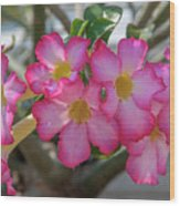 Desert Rose Or Chuanchom Dthb2105 Wood Print