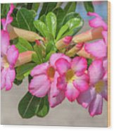 Desert Rose Or Chuanchom Dthb2106 Wood Print