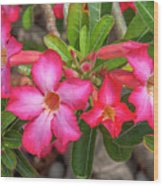 Desert Rose Or Chuanchom Dthb2108 Wood Print
