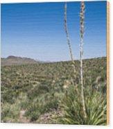 Desert Spoon Wood Print