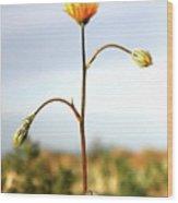 Desert Sun Flower Wood Print