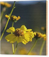 Desert Sunflower Wood Print