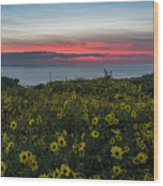 Desert Sunflowers Coastal Sunset Wood Print