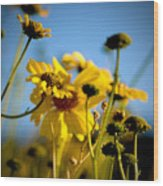 Desert Sunflower Variations Wood Print