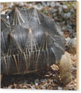 Desert Turtle With An Unusual Shell In The Wild Wood Print
