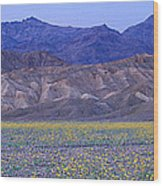 Desert Wildflowers, Death Valley Wood Print