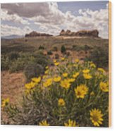 Desert Wildflowers In Spring Wood Print