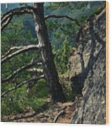 Detail Of A Pine On The Edge Of A Rock Wood Print