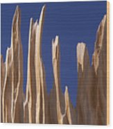 Detail Of Bristlecone Pine Wood Print