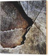 Detail Old Sawn Stump Wood Print