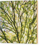 Detailed Tree Branches 1 Wood Print