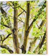 Detailed Tree Branches 2 Wood Print