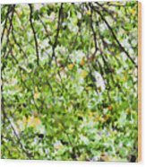 Detailed Tree Branches 4 Wood Print