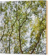 Detailed Tree Branches 5 Wood Print