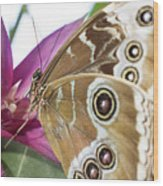 Detailed Wings Wood Print