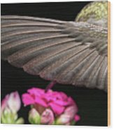 Details Of The Hummingbird Wing Wood Print