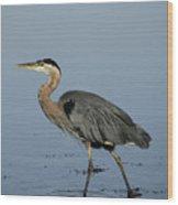 Determination - Great Blue Heron Wood Print