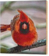 Determined Cardinal  Wood Print