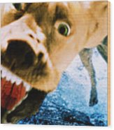Devil Dog Underwater Wood Print