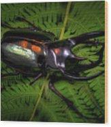 Devil Horned Rhino Beetle Wood Print
