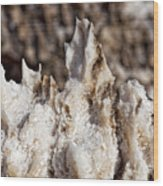 Devil's Horns Wood Print