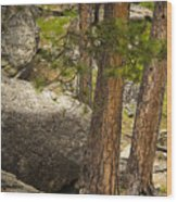 Devils Tower Trees Wood Print
