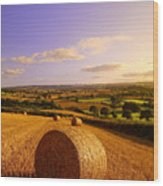Devon Haybales Wood Print by Neil Buchan-Grant