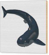 Devonian Cladoselache Shark Wood Print