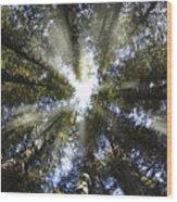 Devoto Grove Wood Print