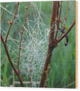 Dew Covered Spider Web Wood Print