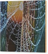 Dew Covered Web Wood Print