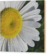 Dew Dazzled Daisy Wood Print