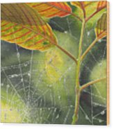 Dew Drop Wood Print